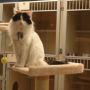 January Pet of the Month